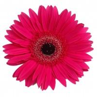 Флористические материалы